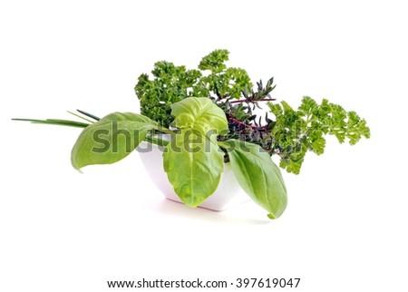 Herbs. Fresh herbs on white background.Herbs.  Herbs isolated on white. Herbs. Healthy herbs.Herbs.  Herbs for cook. Herbs. Herbs for grilling. Herbs.   - stock photo