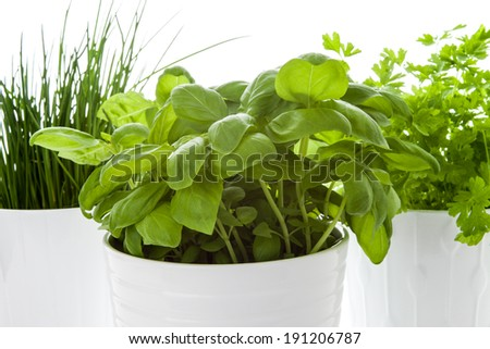 Herbs in a pot in the kitchen  - stock photo
