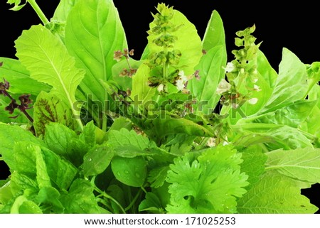 herbs in black background - stock photo