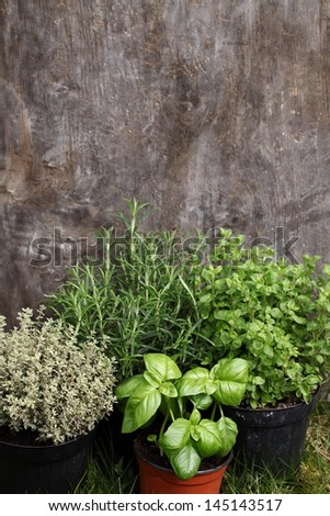 Herbs in flower pots on grass with wooden background. - stock photo
