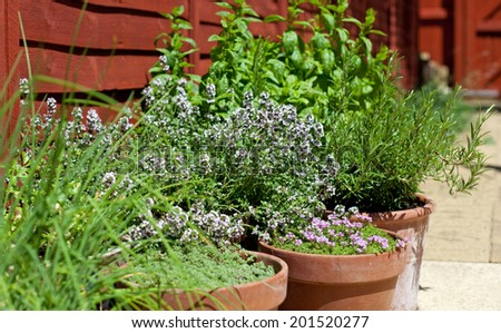 Herbs in pots - outdoor shot - stock photo