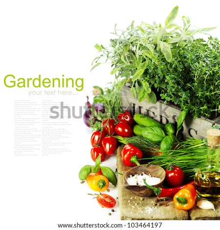 herbs in the box and fresh vegetables over white - stock photo