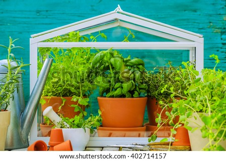 Herbs in the greenhouse - stock photo