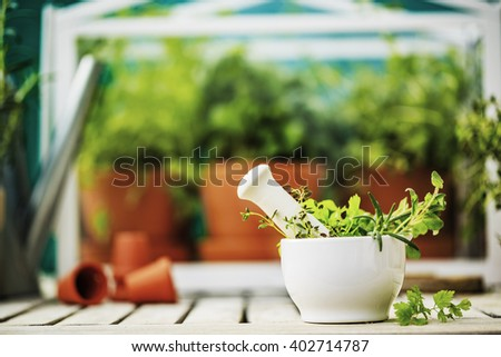Herbs in the greenhouse and in mortar. - stock photo