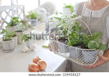 Herbs kitchen garden and woman - stock photo