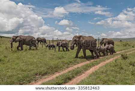 Herd of african elephants - Kenya, Africa - stock photo