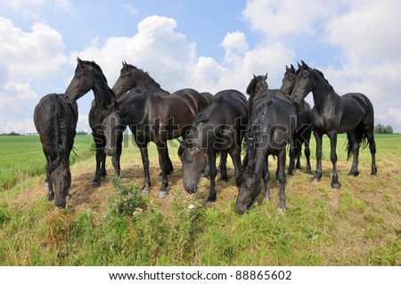Herd of black horses in a field against a beautiful clouded sky - stock photo
