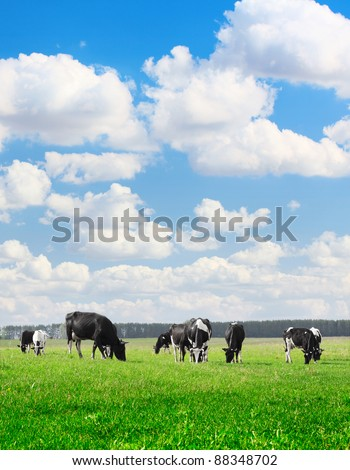 Herd of cows grazing on a green meadow - stock photo