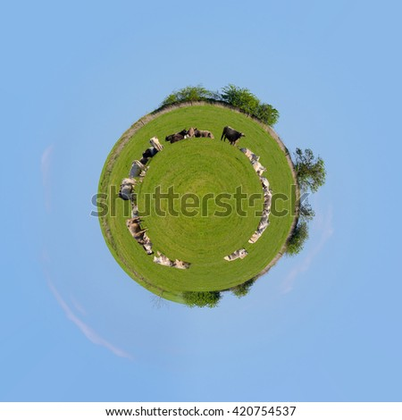 Herd of cows on green grass, rural scene, countryside tranquil landscape. Beautiful Little planet ecology concept. Tiny green planet - stock photo