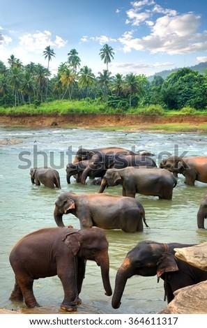 Herd of elefants - stock photo