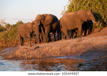 Herd of elephant - stock photo