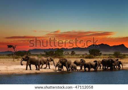 Herd of elephants in african savanna at sunset - stock photo