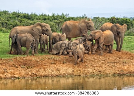 herd of elephants near a waterhole at addo elephant park , soft focus - stock photo