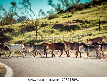 Herd of Goats Grazing in the Mountains in Spain - stock photo