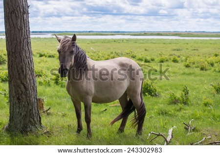 Herd of horses grazing in a meadow. Green pastures of horse farms. Country summer landscape. - stock photo