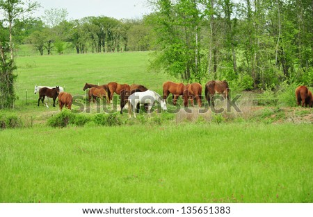 Herd of Horses Grazing on Green Grass - stock photo