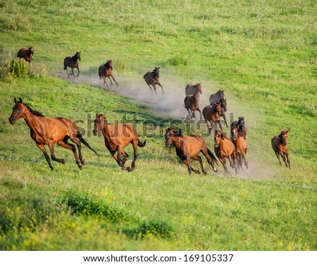 herd of horses grazing on the back with background of green field - stock photo