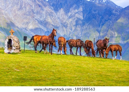 Herd of horses in Kazbegi; Georgia - stock photo