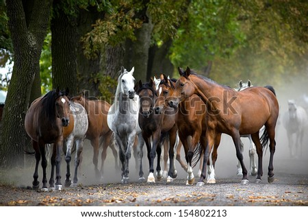 Herd of horses on the village road - stock photo