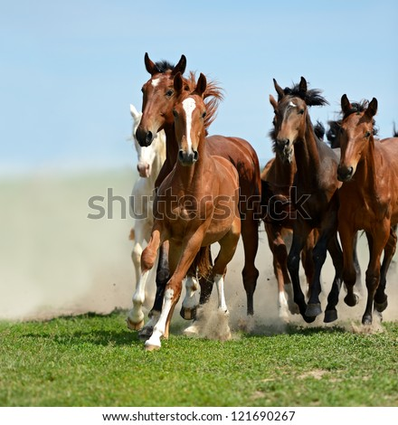 Herd of horses running gallop on the field - stock photo