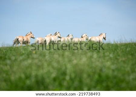 Herd of horses running on meadow - stock photo