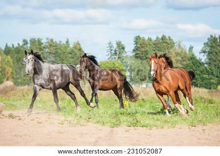 Herd of horses running on the pasture in autumn - stock photo