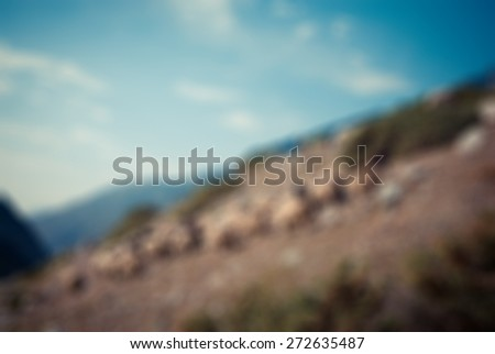 Herd of sheep high in Caucasus mountains - stock photo