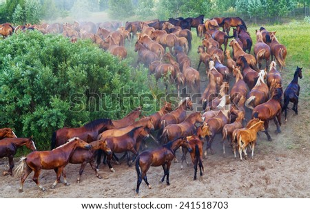 Herd of the red horses skipping from a watering place. - stock photo