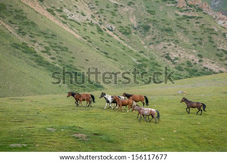 Herd of walking horses with different colours - stock photo