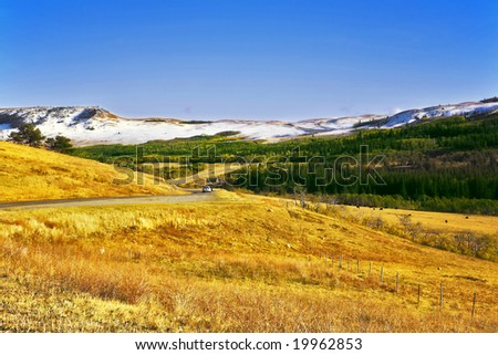 Herd of wild bisons are grazed on slopes of autumn gorge - stock photo