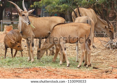 Herds of deer eating grass green happiness - stock photo