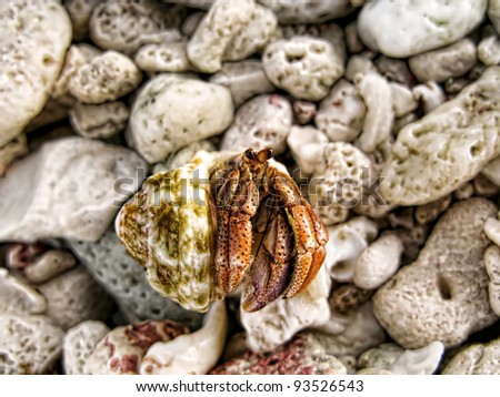 hermit crab on soft focus coral background - stock photo