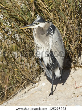 Heron at rest - stock photo