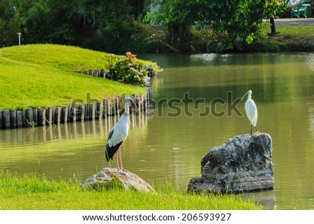 Heron standing on a rock in the garden. - stock photo
