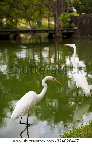 Herons birds in the lake on amazon - stock photo
