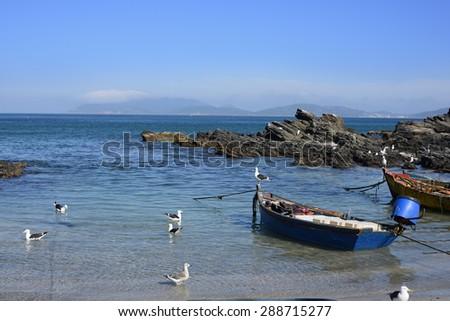 Herons Fishing on the Sea - Cabo Frio, Rio de Janeiro - stock photo