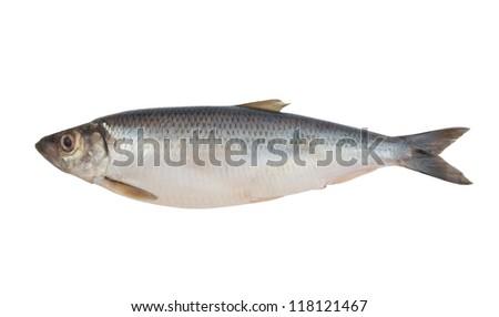 Herring fish isolated on white background - stock photo