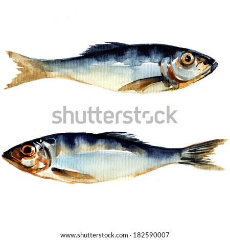 herring fish. watercolor painting on white background - stock photo