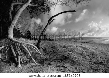 hervey bay whale watching beach tree  background queensalnd australia in black and white - stock photo