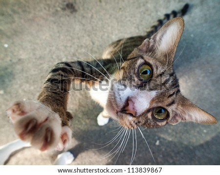 Hi cat - stock photo