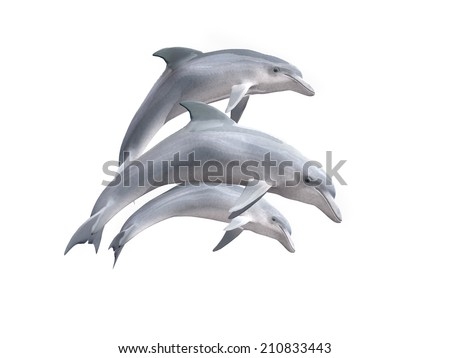 HI res Dolphins isolated on a white background  - stock photo
