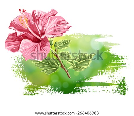 Hibiscus flower on green background - stock photo