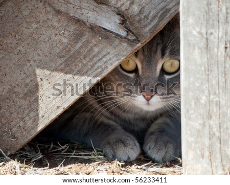Hide a kitty - cat hiding under wooden steps - stock photo