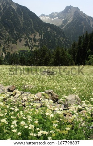 high altitude pasture in vall de lliterola in springtime - stock photo
