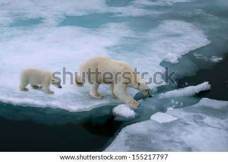 high angle of mother polar bear and cub walking on ice floe in arctic ocean north of svalbard norway - stock photo