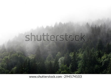 High angle view of green fir trees on a mountain covered in mist - stock photo