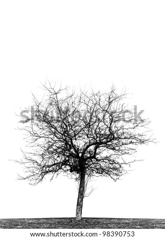 High contrast black and white silhouette of single leafless crab apple tree in a field.  Vertical, isolated on white background, copy space. - stock photo