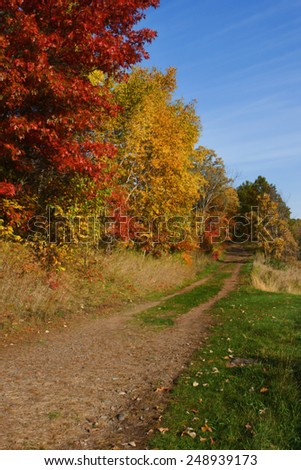 High Dynamic Range image of a forest. - stock photo