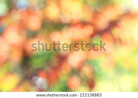 High key fall background colors defocused - stock photo