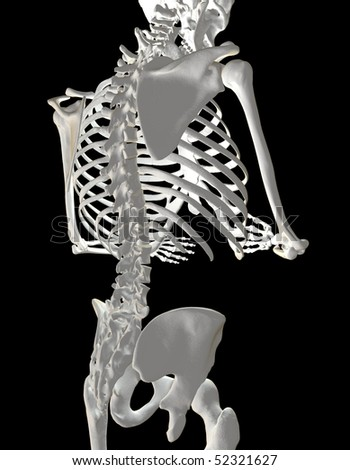 High Quality 3D rendering of Human Back and Spine - stock photo